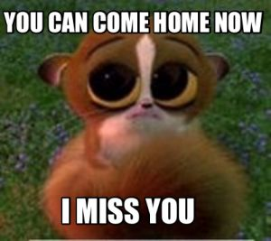 I Miss You meme Funny/Funny Miss You Quotes