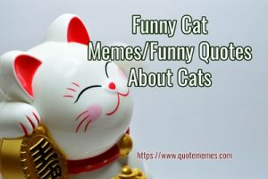 Funny Cat Memes/Funny Quotes About Cats